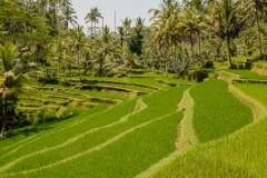 Bali Sightseeing-3